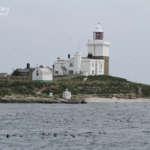 Coquet Island : Roseate tern's Island !