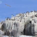 Farne Islands : Boat trip – all day Birdwatch, le tour de Staple