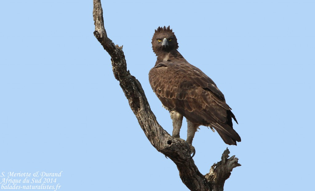 Kruger J 5 Lower Sabie Skukuza Balades Naturalistes