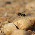 Le faucon et la fourmi