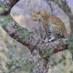 Parc National du Kruger