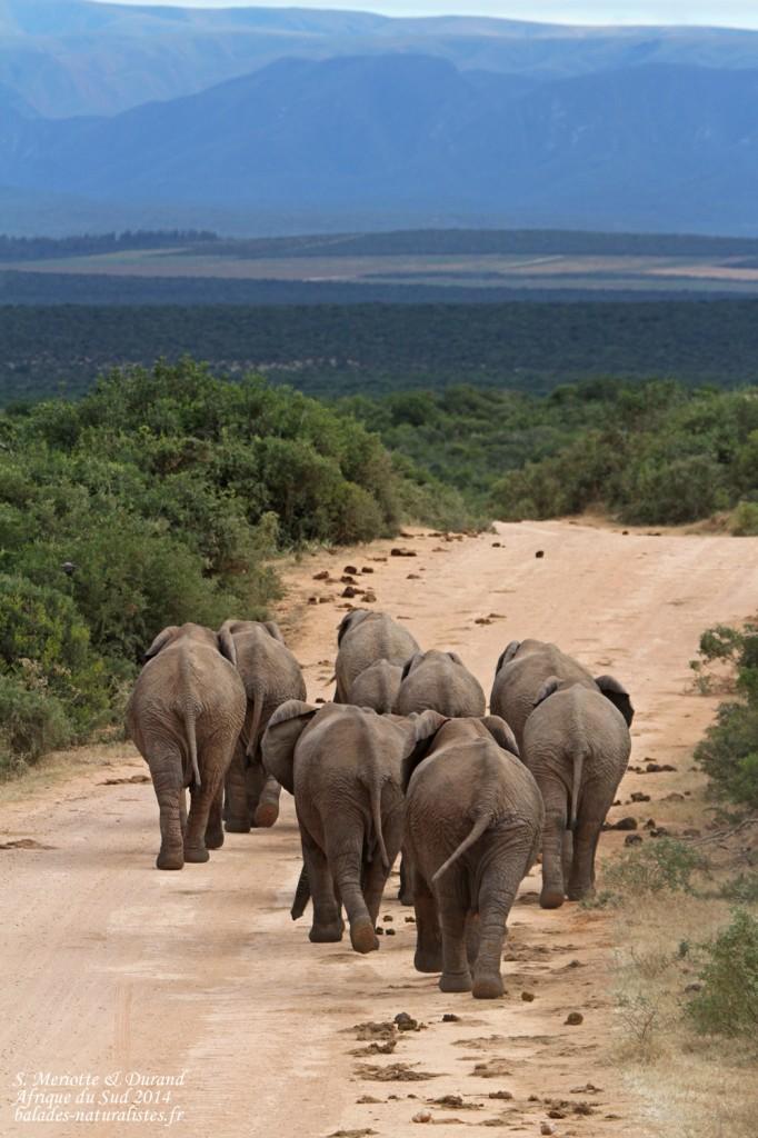 addo elephant national park j2 balades naturalistes. Black Bedroom Furniture Sets. Home Design Ideas