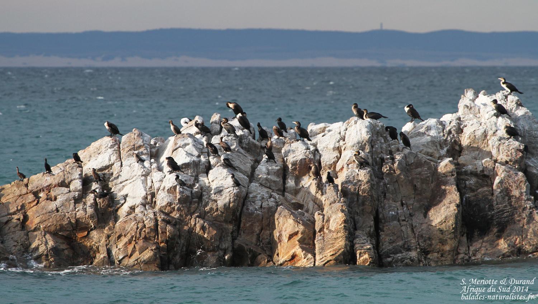 La r serve de cap recife balades naturalistes - Port elizabeth afrique du sud ...