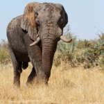 Marche mondiale pour les éléphants et les rhinocéros