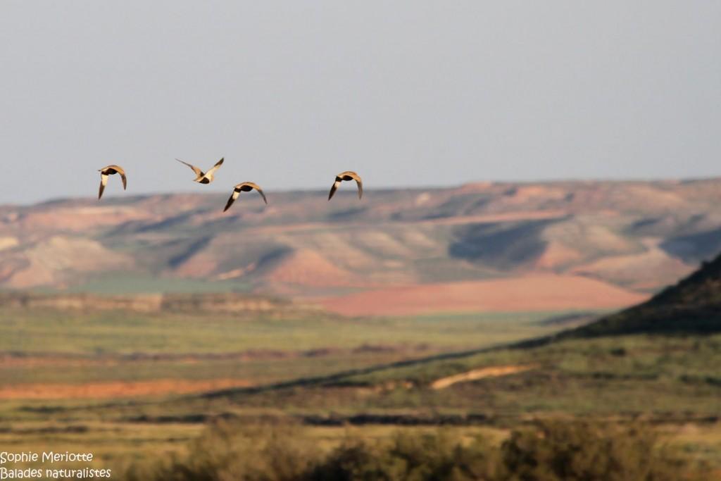 Aragon : La région de Saragosse et les steppes de Belchite