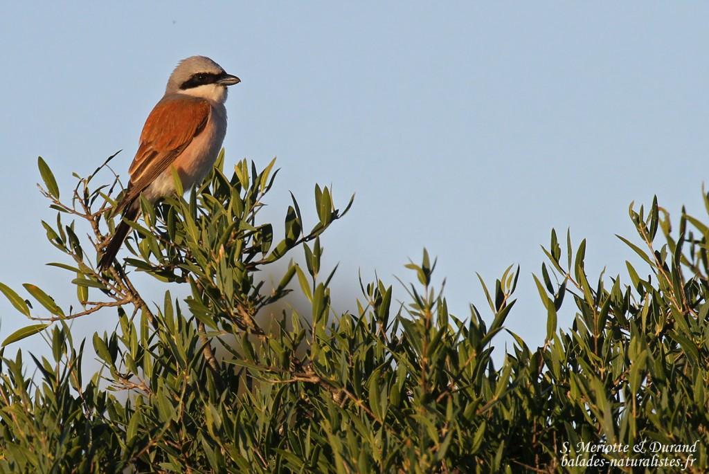... prochainement http paca lpo fr rencontres naturalistes paca