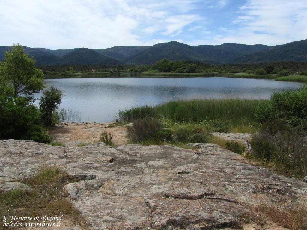 Lac des Escarcets, Plaine des Maures (83)