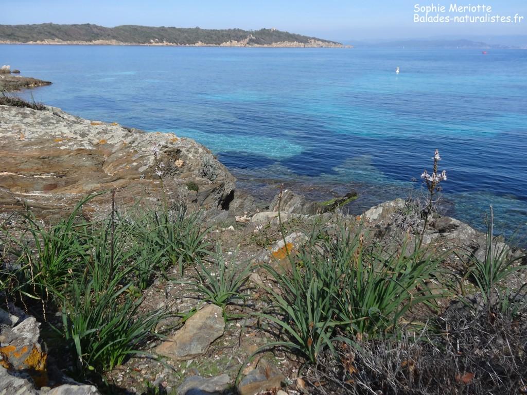 Port-Cros et l'île de Bagaud