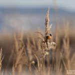 Balade nature aux gravières et au bord de l'étang de Berre