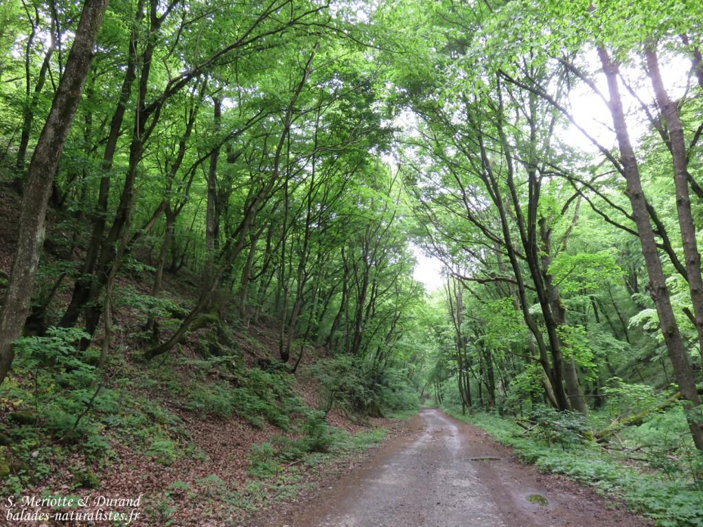 Bukk Nemzeti Park, Hongrie