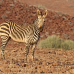 Photothèque Namibie