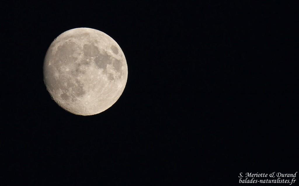 La lune se lève sur le Lac du Der