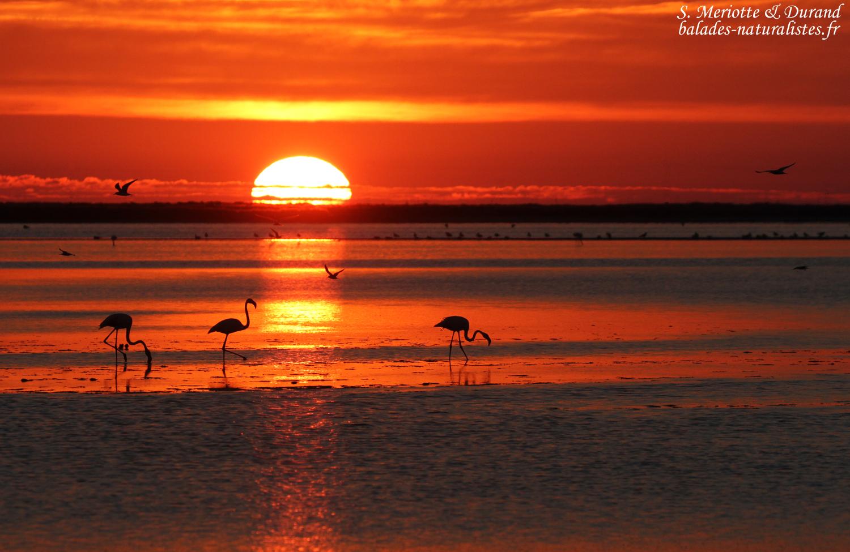 Une fin d t en camargue balades naturalistes - Horaire coucher du soleil aujourd hui ...