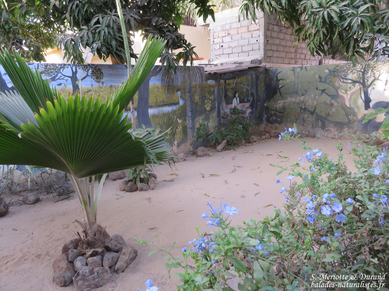 Route de dakar saint louis balades naturalistes for Le jardin dakar