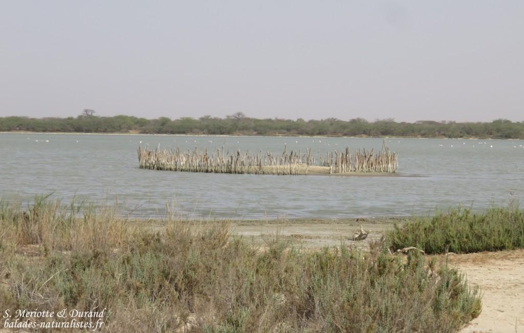 Ilot de nidification, Réserve de Guembeul