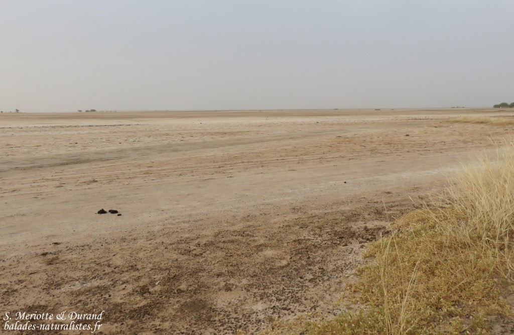 Les bords du Saloum à Kaolack, Sénégal