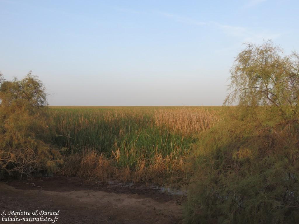 Pistes près du Djoudj