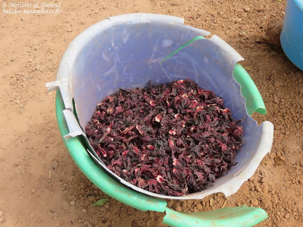 Fleurs d'hibiscus, oseille de Guinée pour le bissap