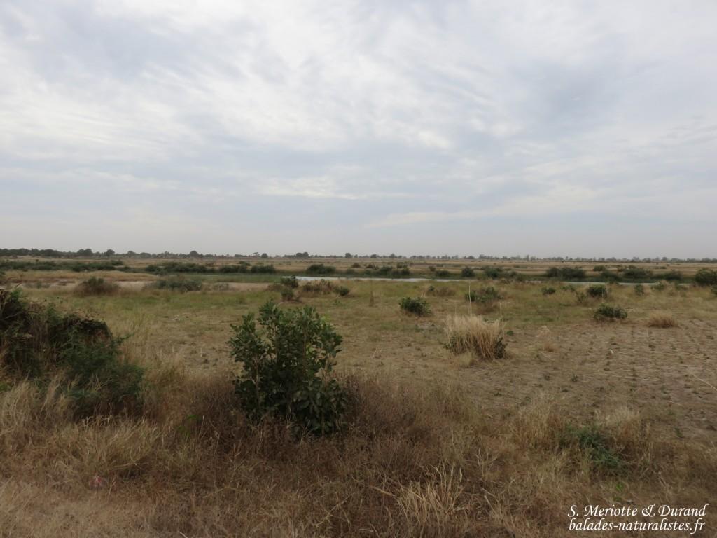 Paysages près du Sine Saloum