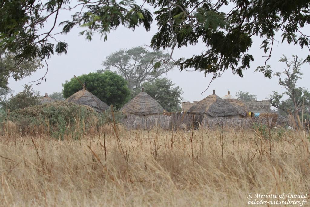 Village près de Kaolack
