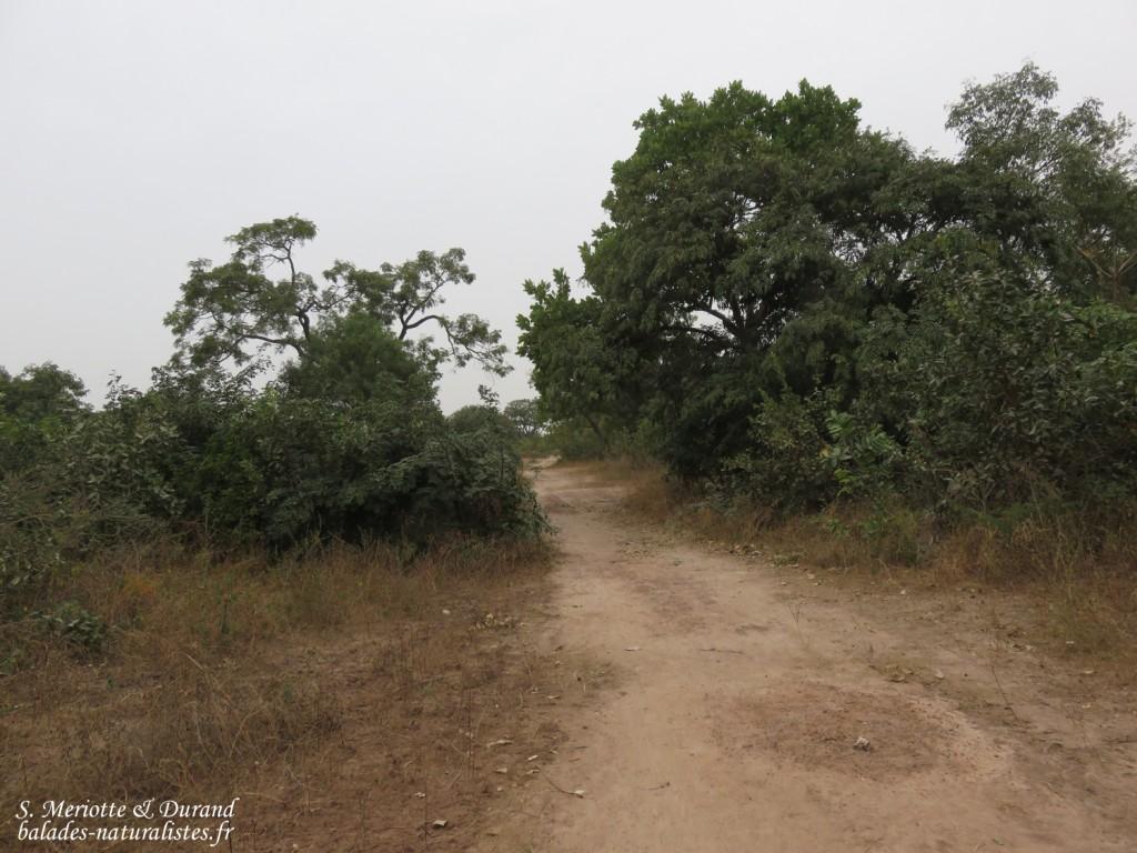 Forêt au sud du Sine Saloum, Sénégal