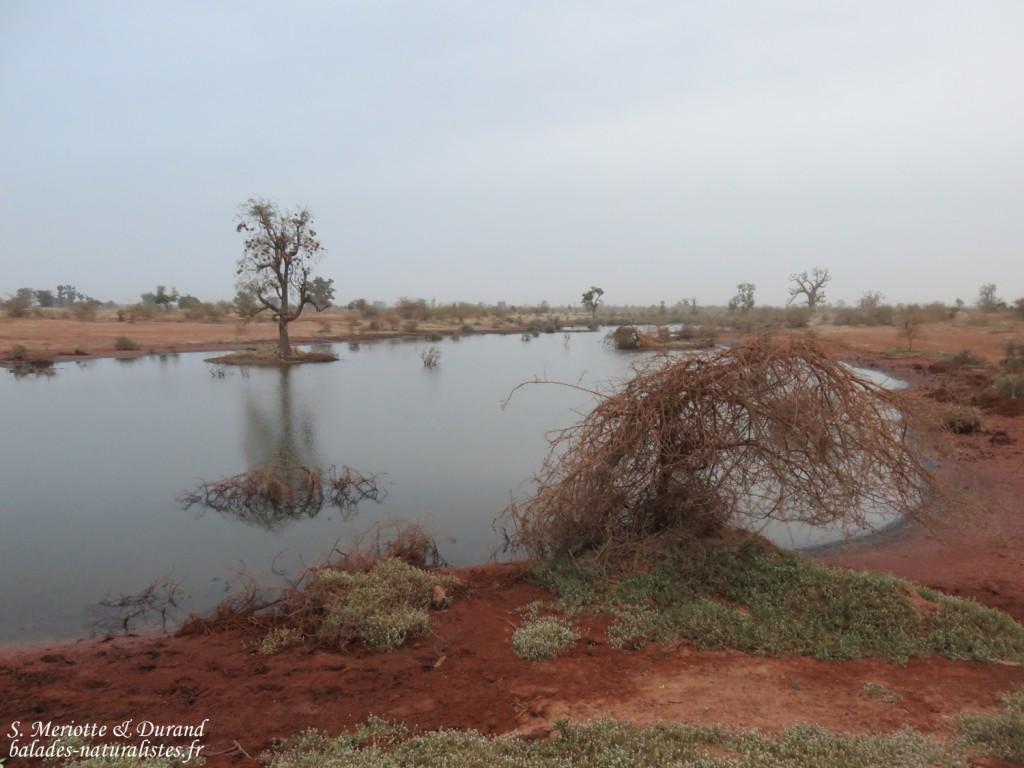 Sud du Sine Saloum, Sénégal