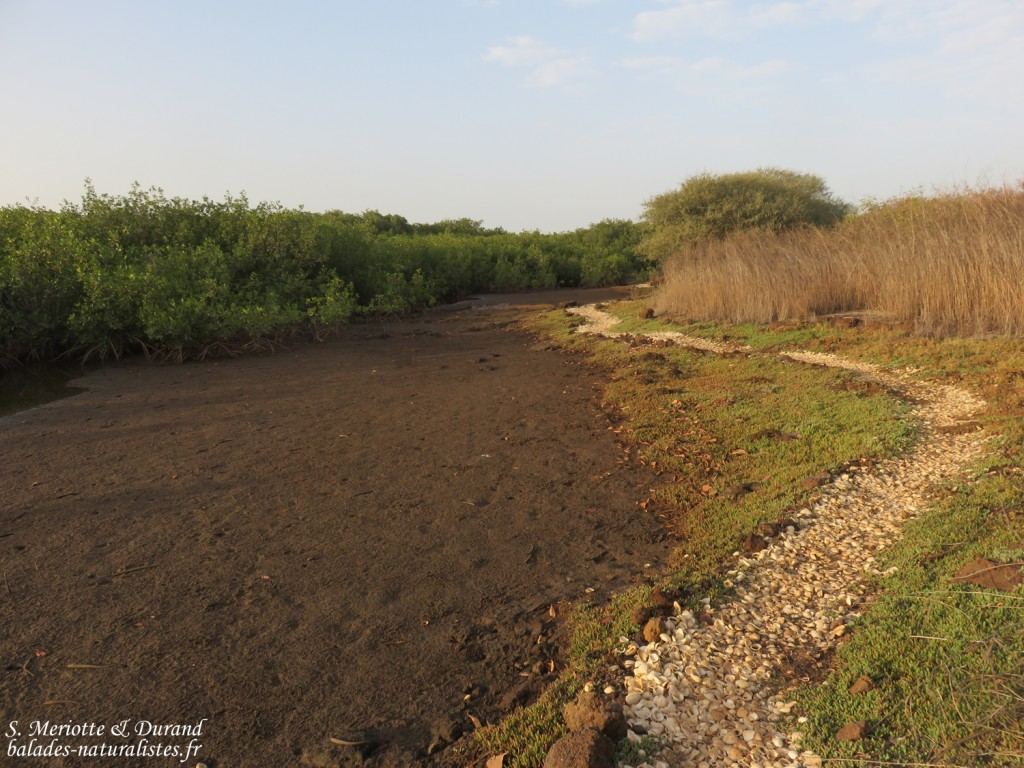 Sentier de découverte, La Somone, Sénégal