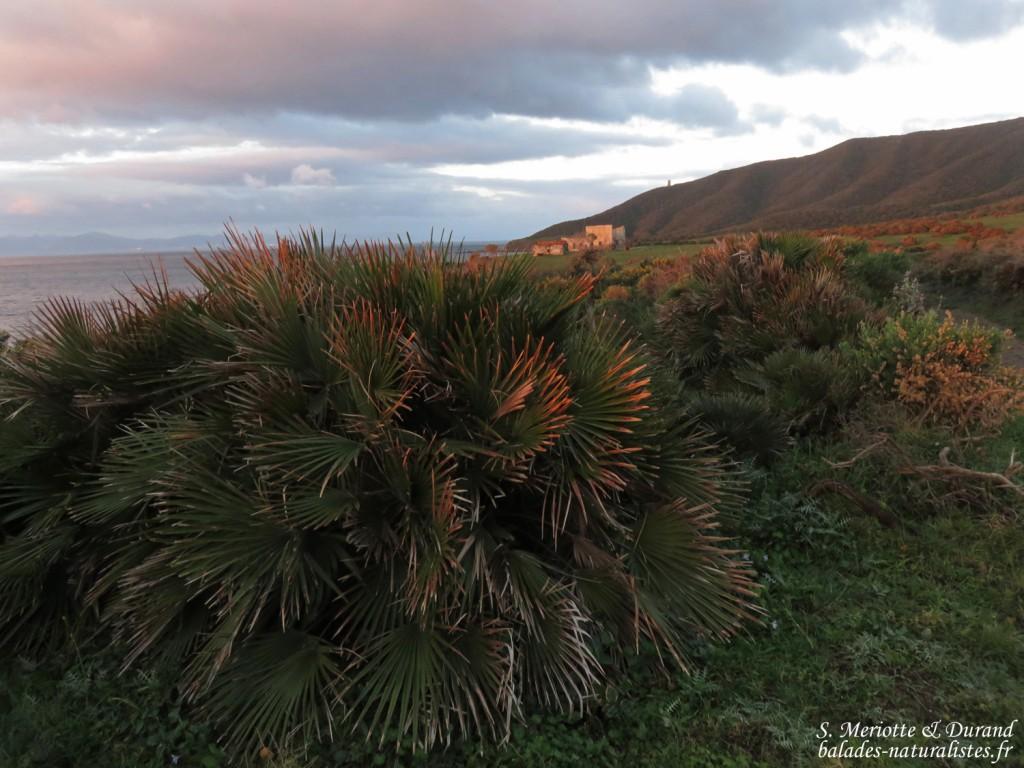 Pointe de Carnero