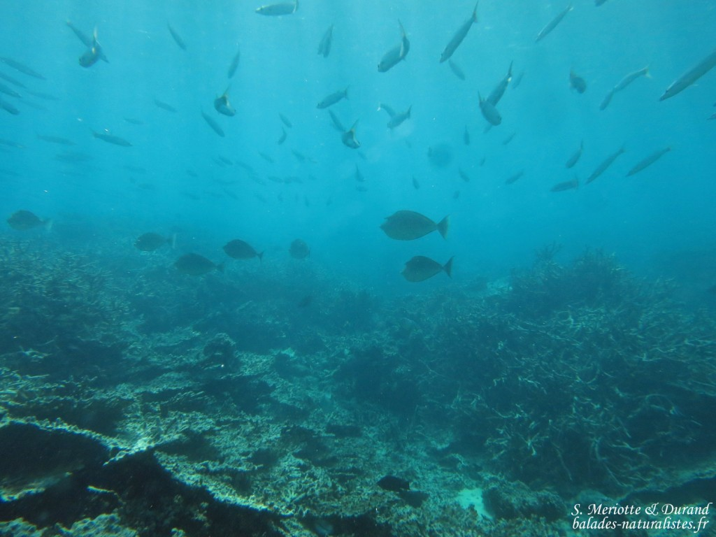 Réserve marine de blue Bay