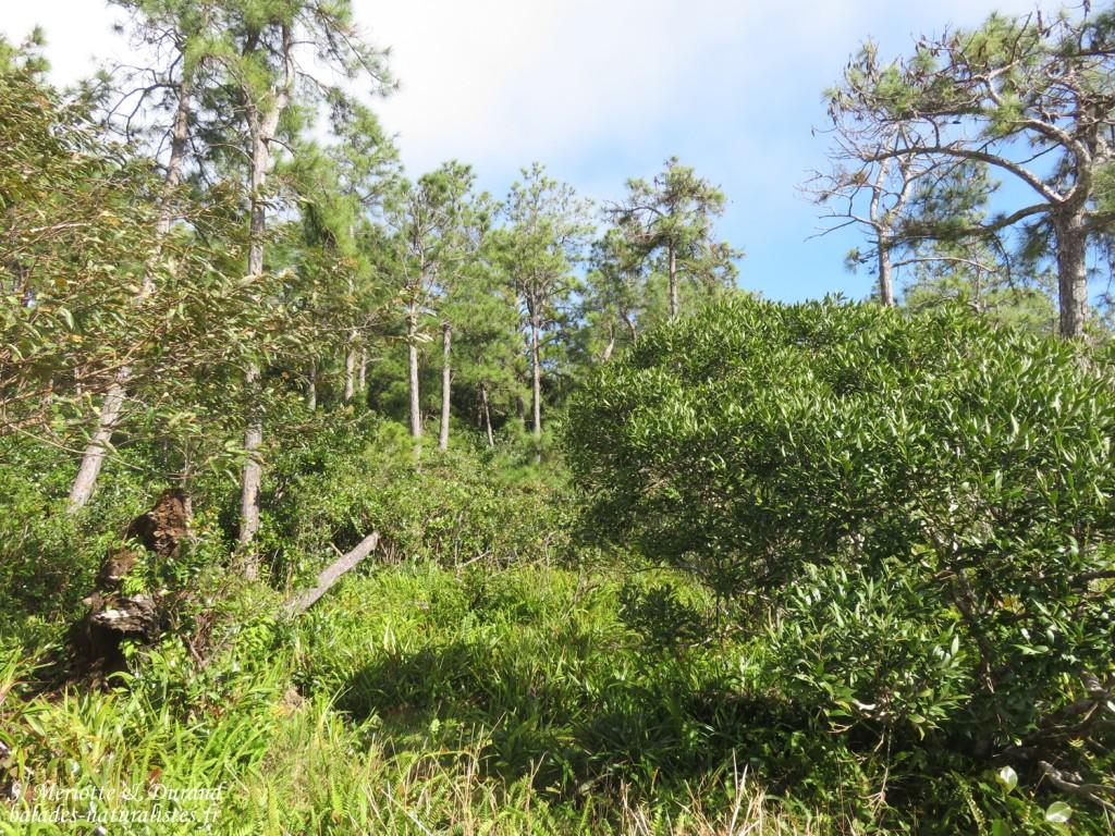 Forêts de la Macchabée traiil