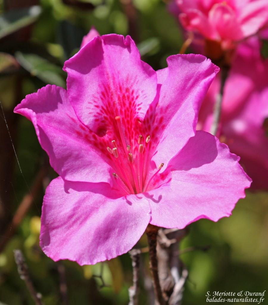 Fleurs sur la Macchabée trail