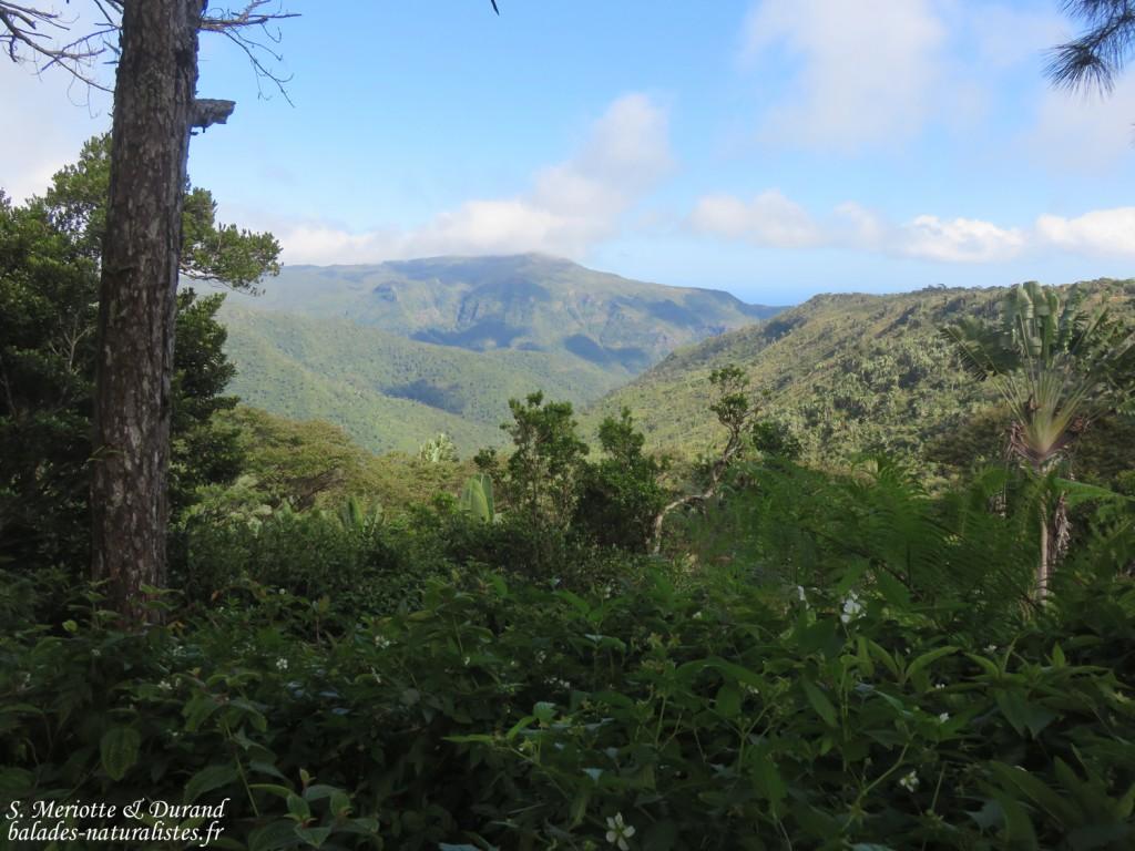 Panorama depuis la Macchabée trail