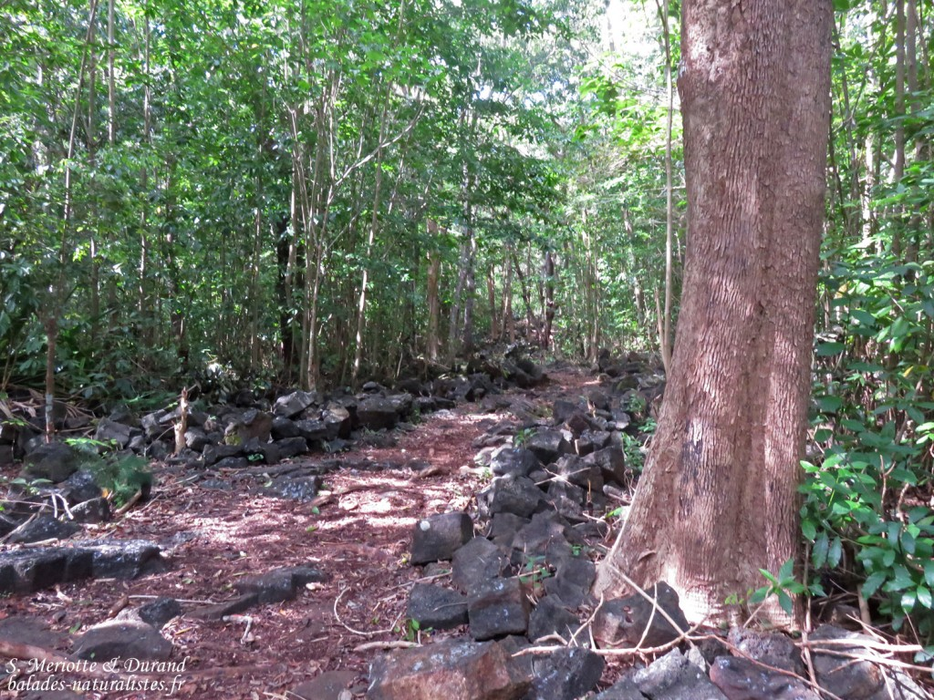Sentier dans le Parc national de Bras d'eau
