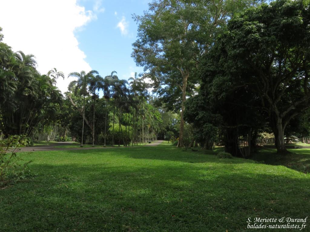Le jardin botanique de sir seewoosagur ramgoolam for Le jardin 19