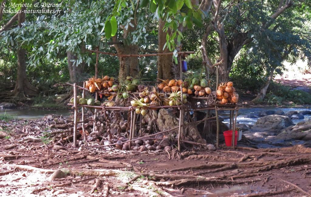 Vendeur de noix de coco à rocherster falls