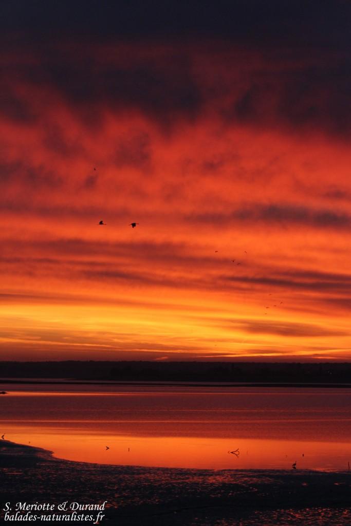 Soleil levant sur le lac du Der