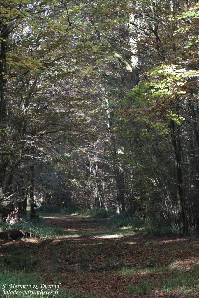 Forêts autour du Lac du Der