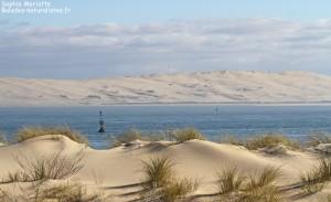 La Dune du Pilat vue depuis le Cap Feret