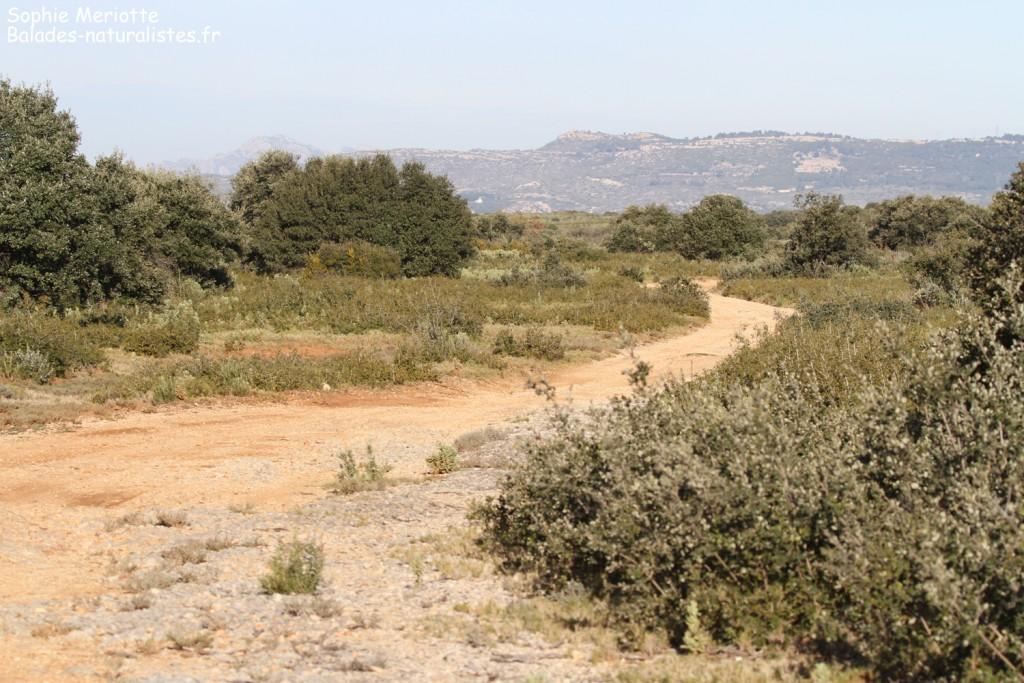 Garrigues dans les Bouches-du-Rhône