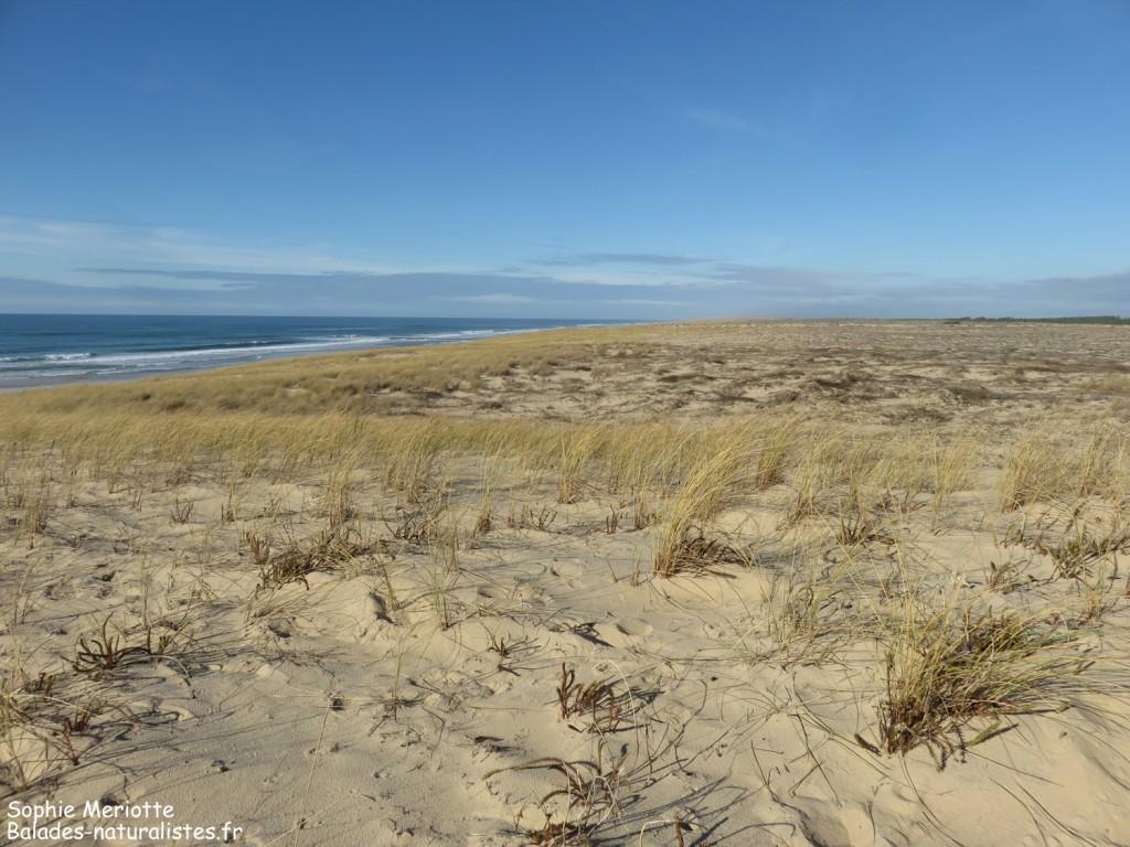 Les dunes du Cap Ferret