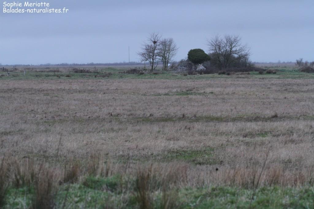 Marais aux alentours de Brouage à la tombée de la nuit