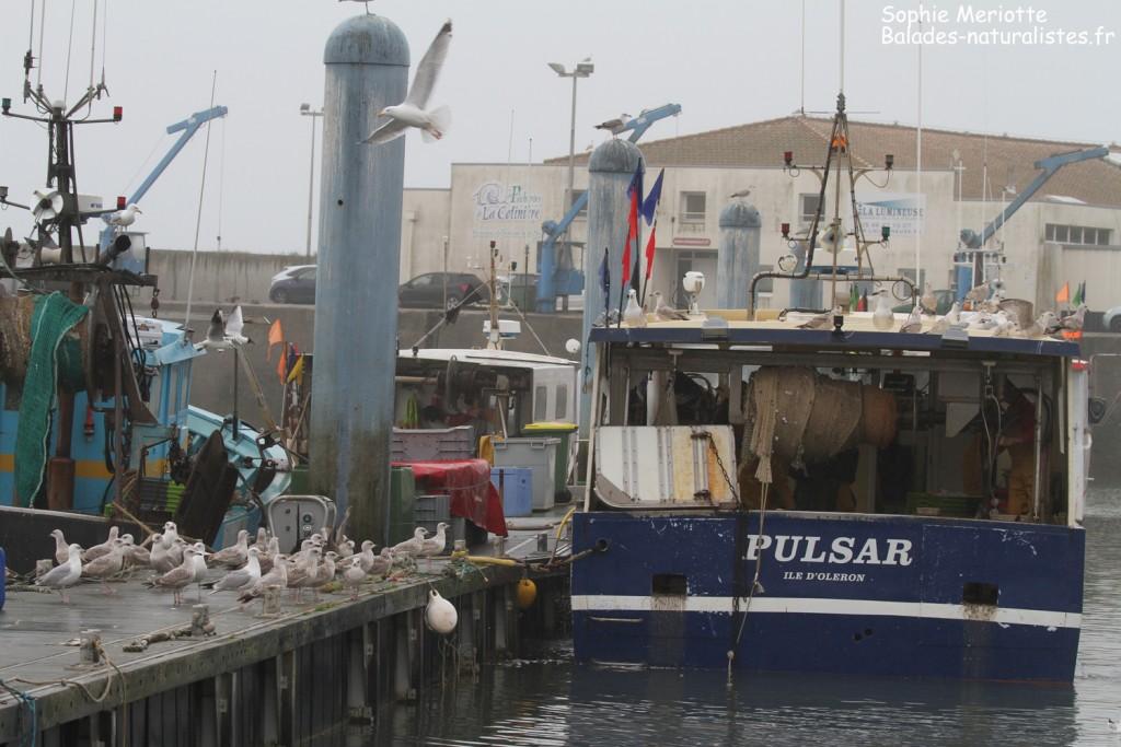 Bateau de pêche dans le port de l Cotinière