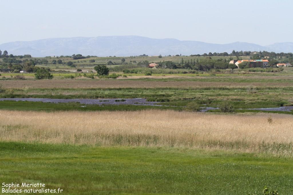 Panorama depuis le spot de migration de Saint-Nazaire