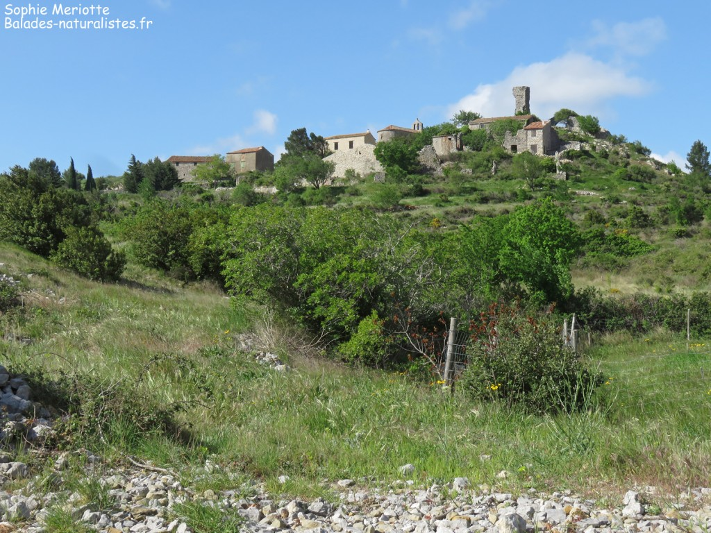 Village d'Opoul