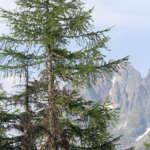 Balade en forêt au départ de Vallorcine