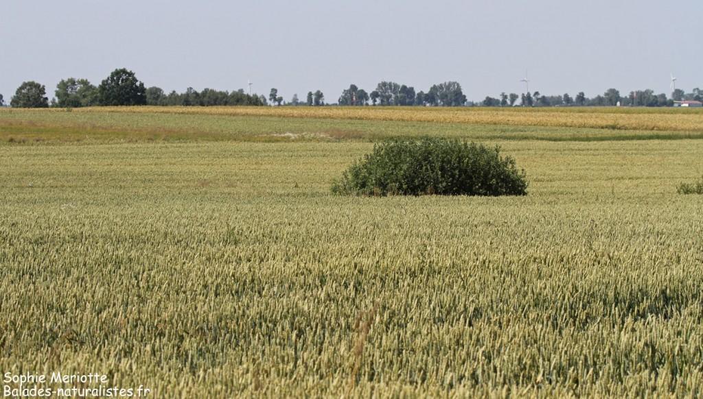 Zones agricoles près d'Hajnowka