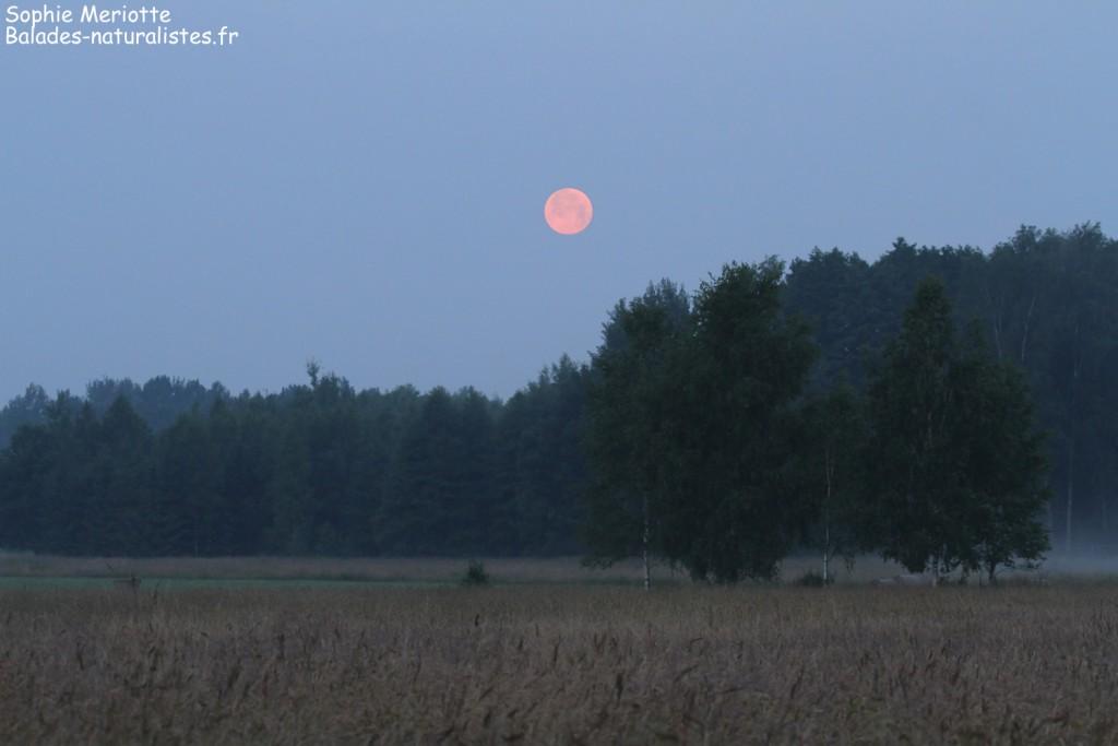 L'aube sur la forêt de Bialowieza