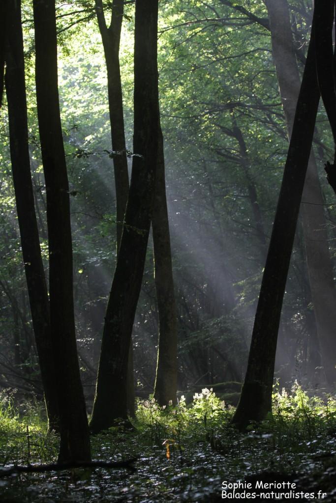 Lumières dans la forêt, Budy black trail