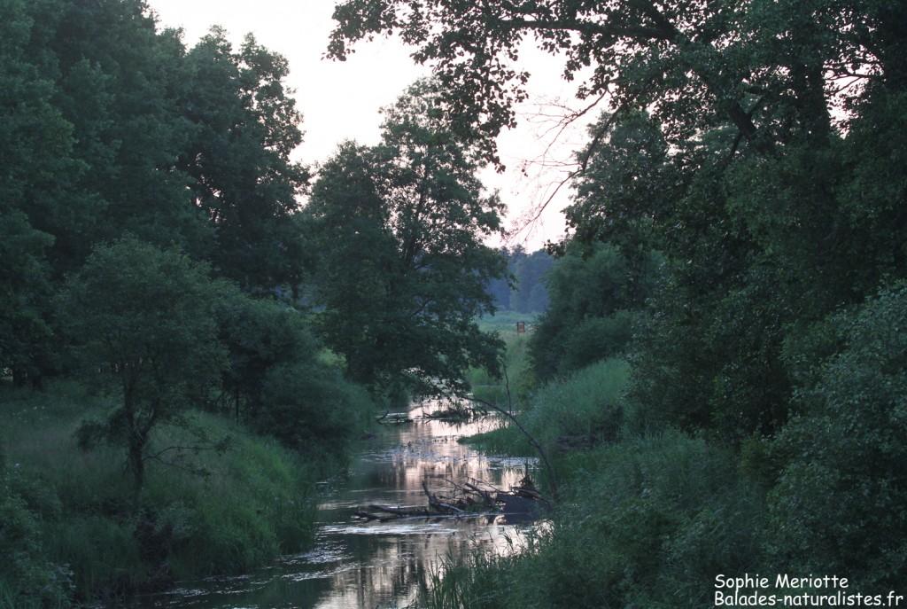 Kosy most