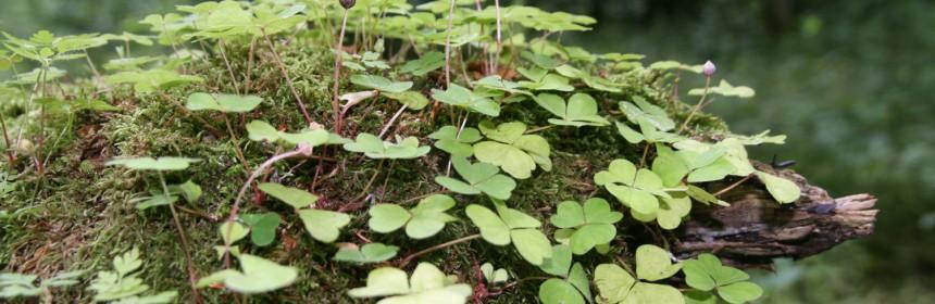 Plantes épiphytes